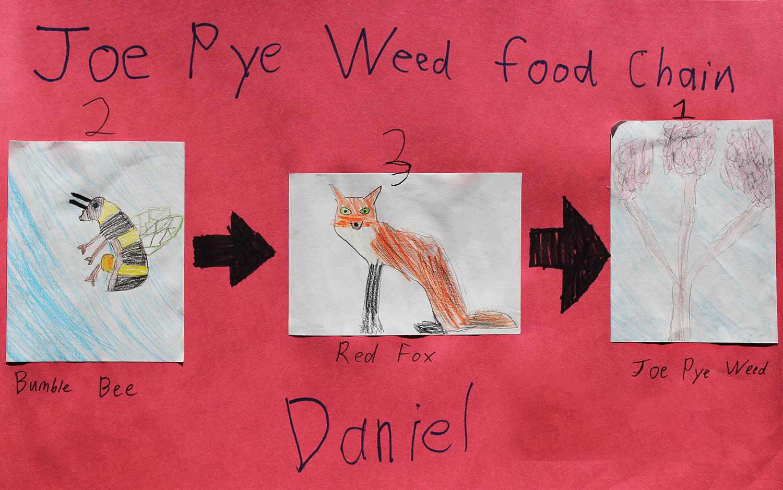 4-Daniel.jpg